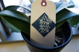 Blue Spruce by RB